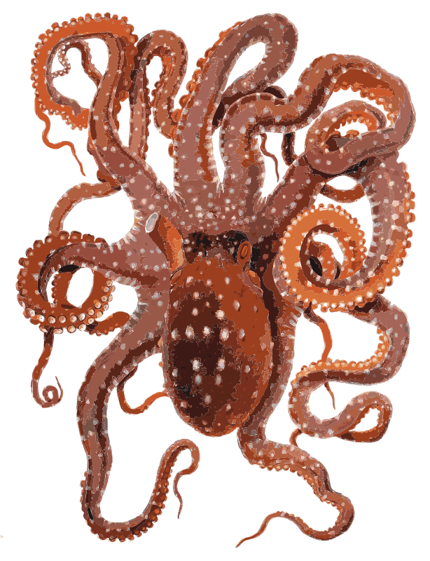 Request Cute Octopus