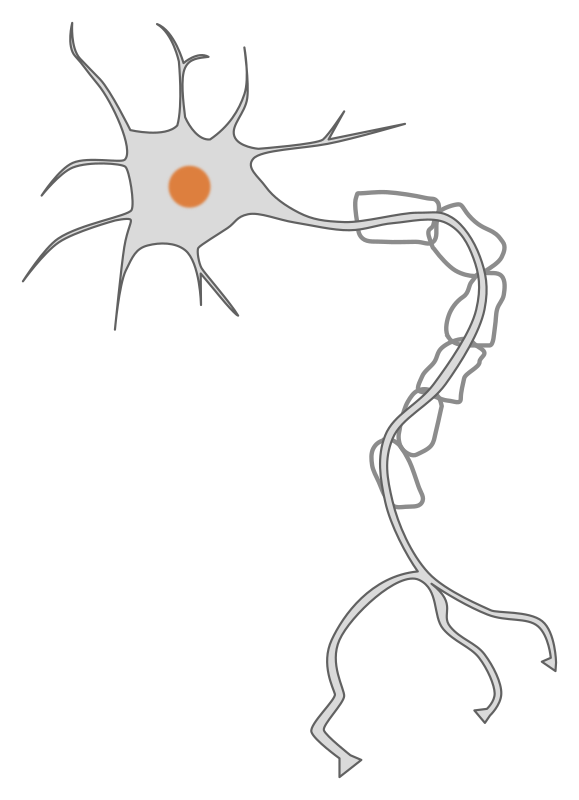 simple neuron