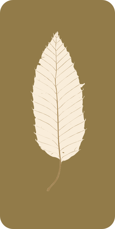 chestnut leaf 2014