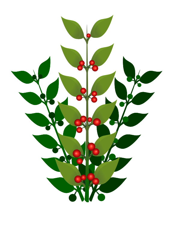 A simple branch with berries