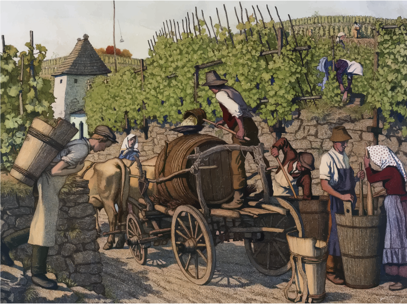 Vintage Harvesting Grapes Illustration
