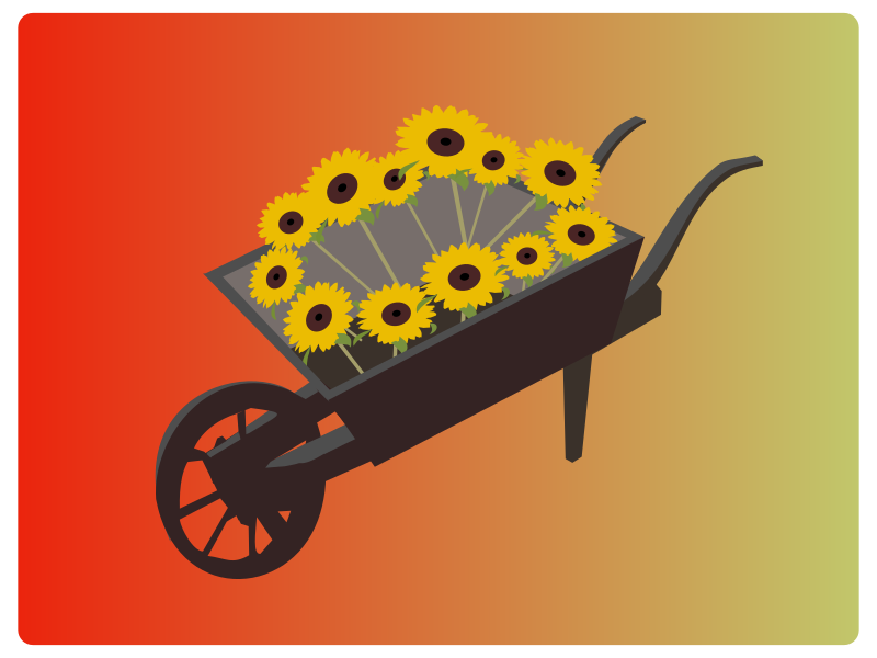 Wheel-barrow-sunflower