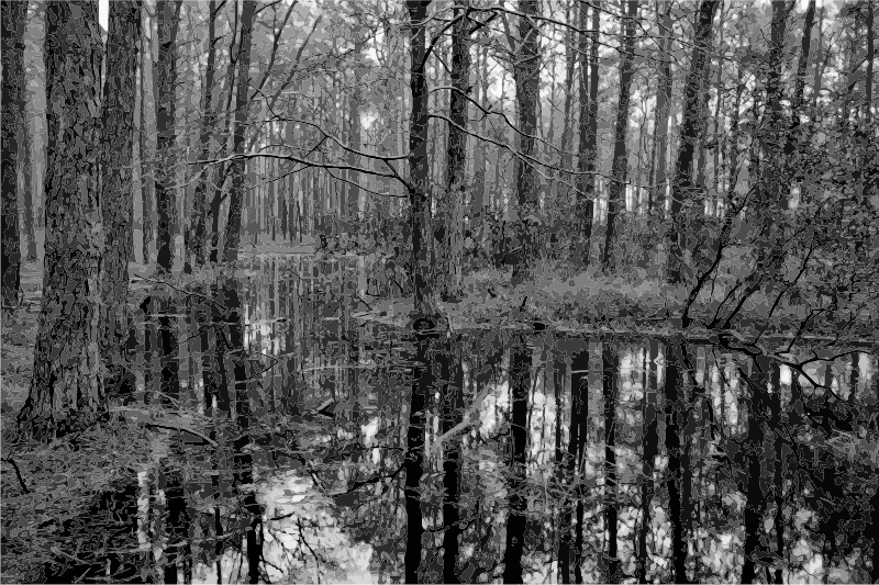 Swamp 2 Grayscale