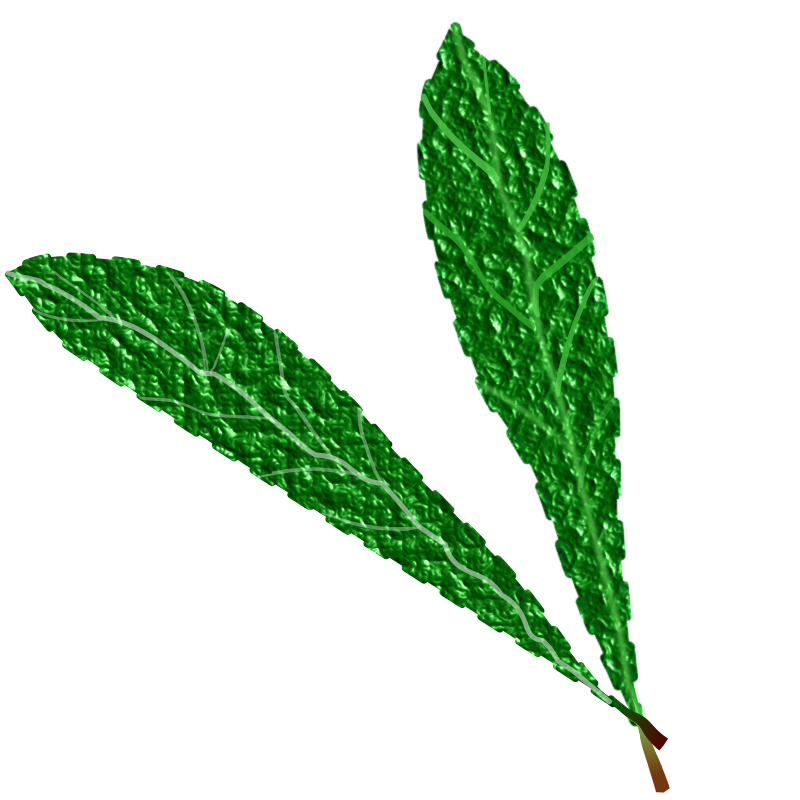 Green leaves, textured