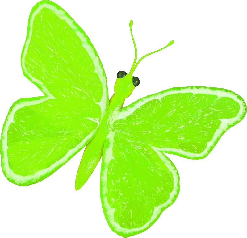Citrus fruit butterfly (lime)