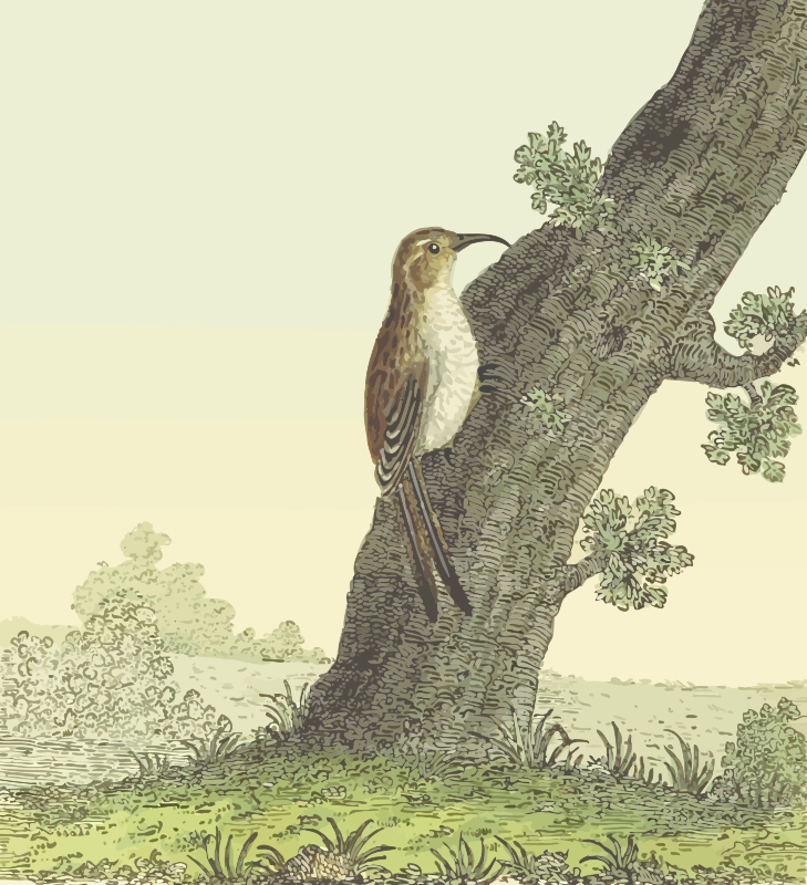 Common treecreeper (with background)