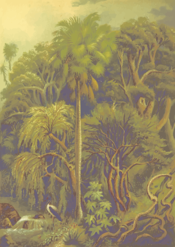 Jungle vegetation
