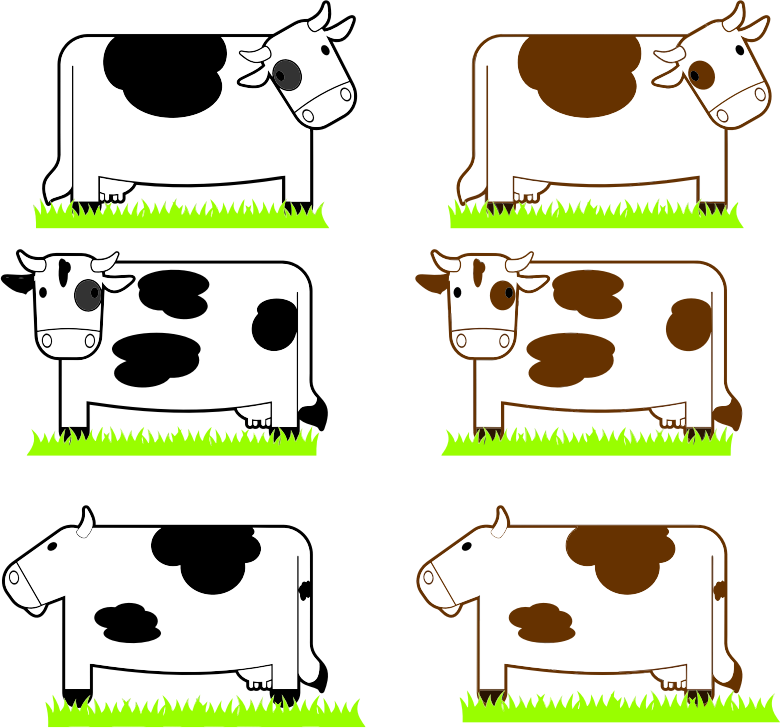 Black And Brown Cows With Grass