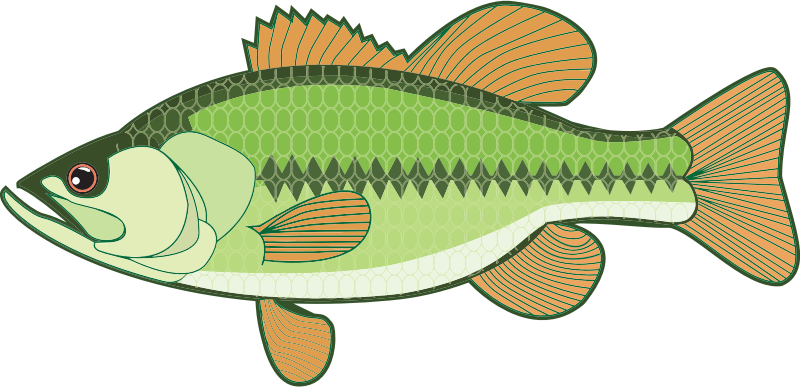 Bass Illustration