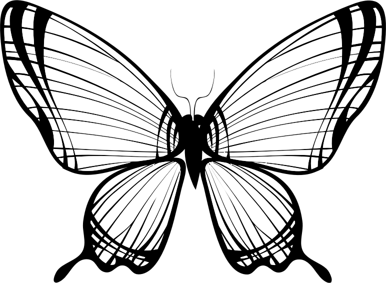 Butterfly Silhouette 11