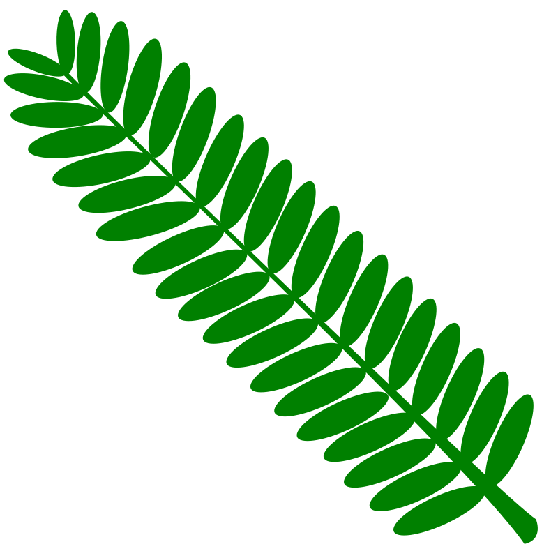 Mimosa leaf twig (touch-me-not) plant- one color