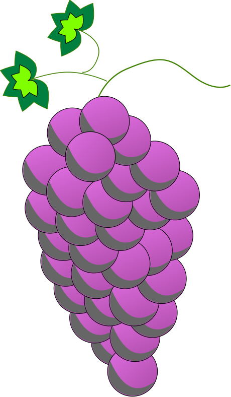 Colored Grapes line art - Purple