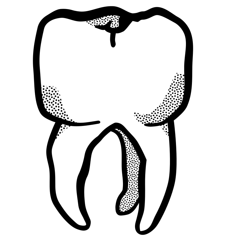 tooth - lineart