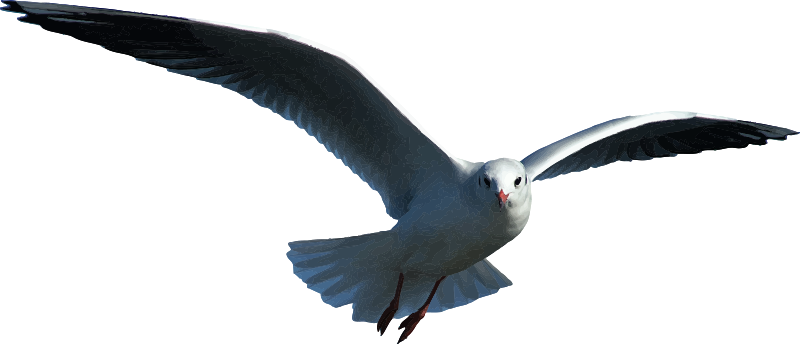 Seagull (detailed)
