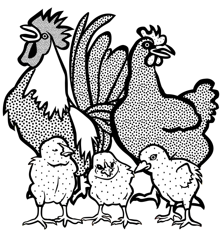 chickens - lineart