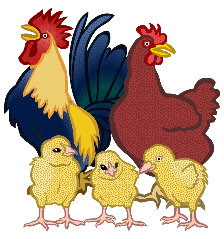 chickens - coloured