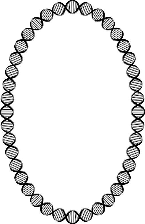 DNA Ellipse