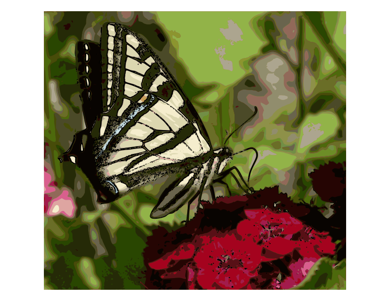 Western Tiger Swallowtail Butterfly - Enhanced color
