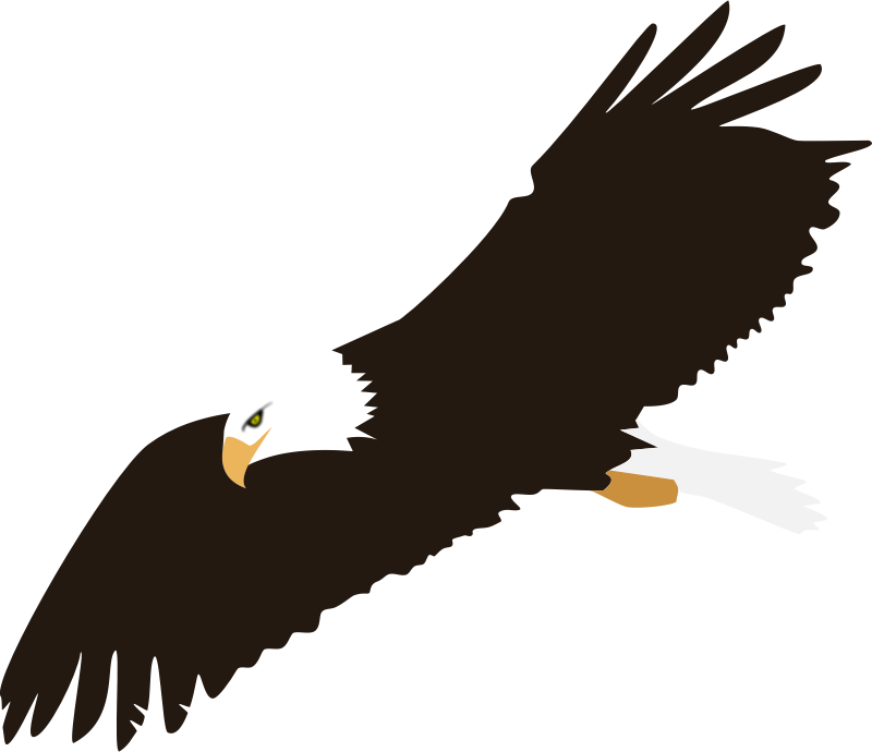 Soaring Eagle (no background)