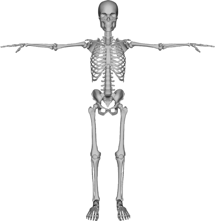 Skeleton With Arms Out