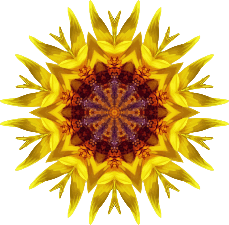 Sunflower kaleidoscope 18