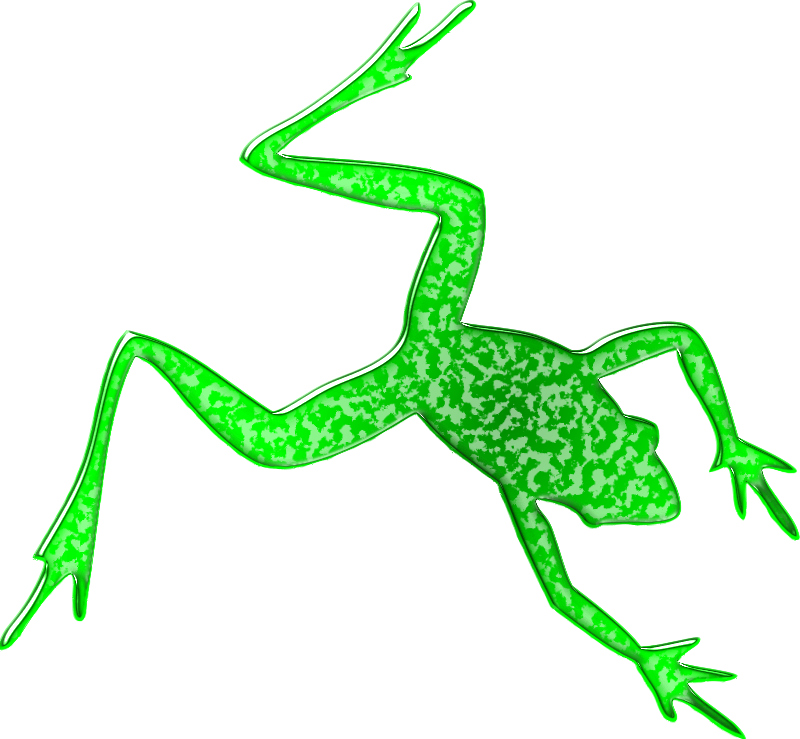 Frog 4
