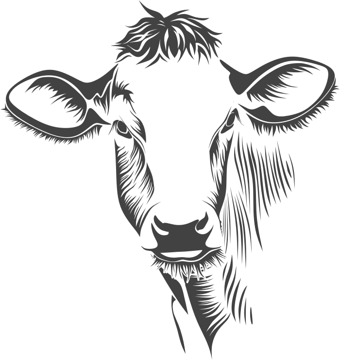 Detailed Cow Line Art