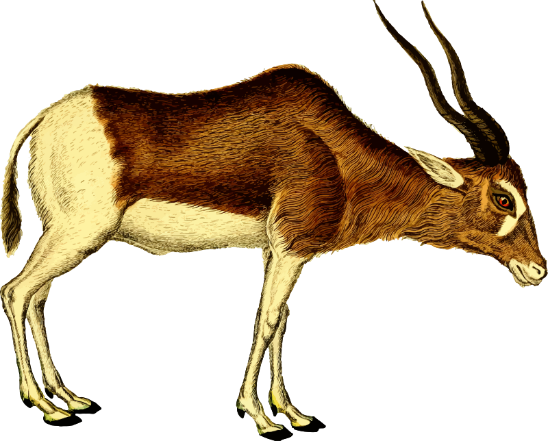 Antelope 2 (isolated)