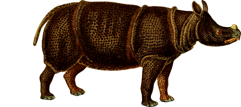 Rhinoceros 4 (isolated)