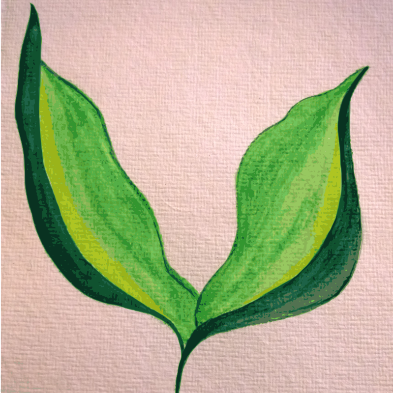 Painted Leaves on hand-made paper, traced.