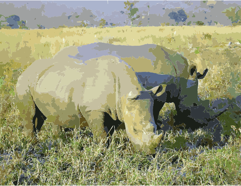Rhinoceros in South Africa adjusted
