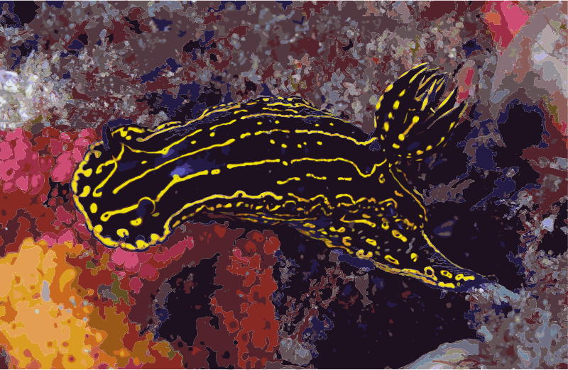 Regal Sea Goddess Nudibranch