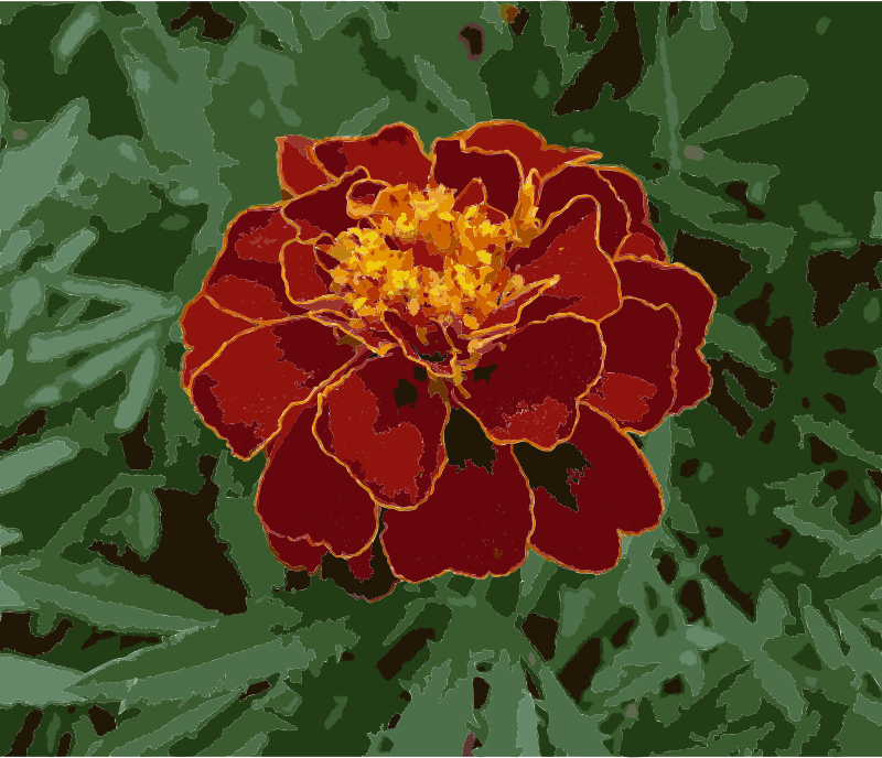 French marigold garden 2009 G1