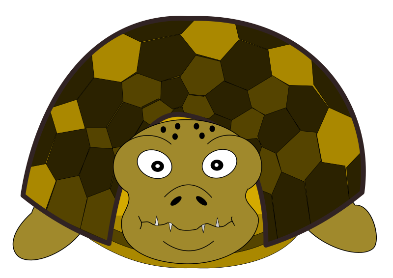 Turtle front