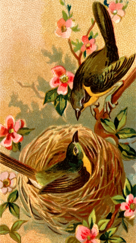 Cigarette card - Yellow-Breasted Chat