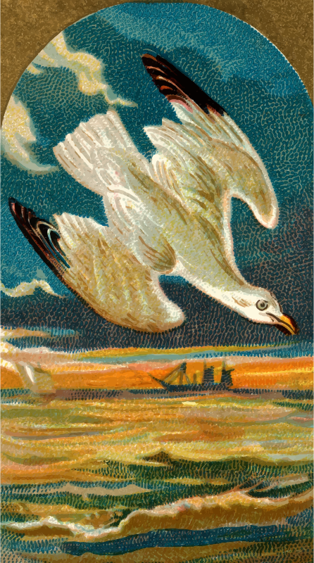 Cigarette card - Seagull