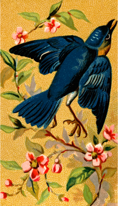 Cigarette card - Bluebird
