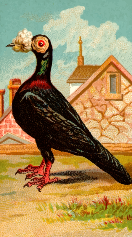 Cigarette card - Carrier Pigeon