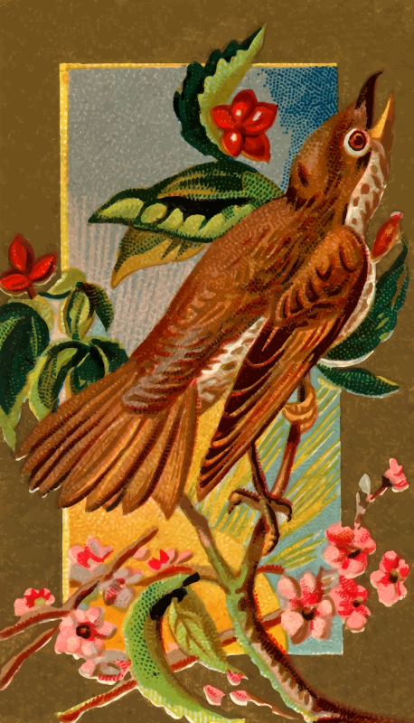 Cigarette card - Wood Thrush