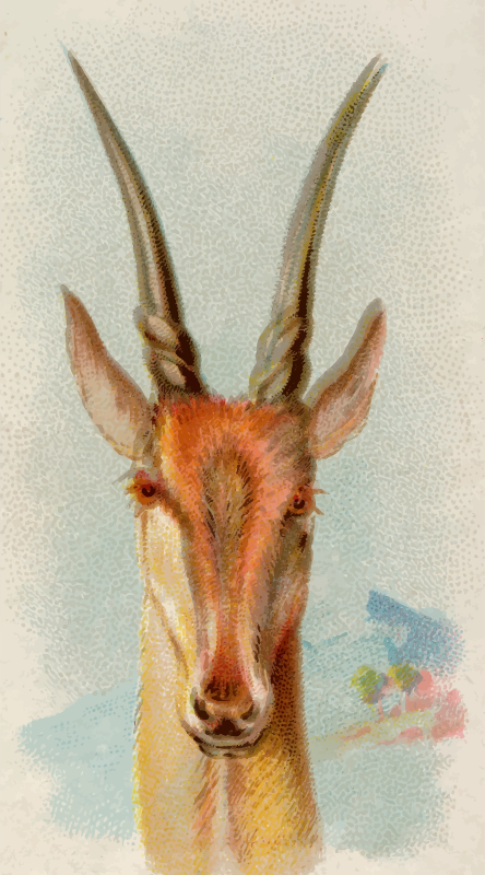 Cigarette card - Eland