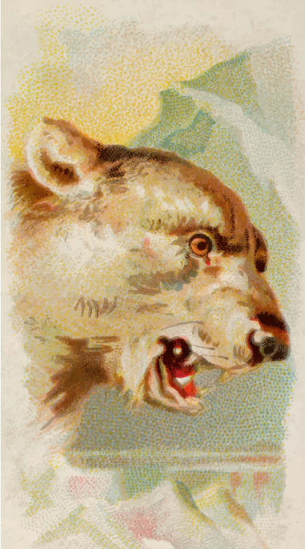 Cigarette card - Polar bear