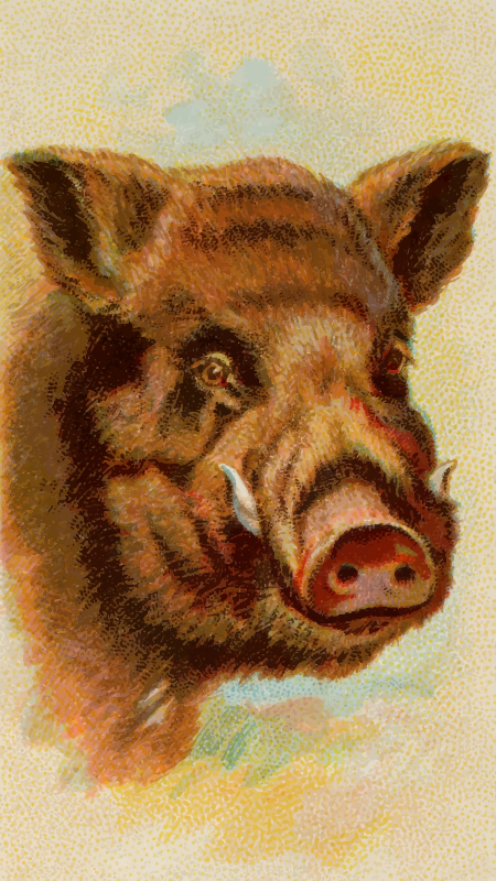 Cigarette card - Painted wild boar