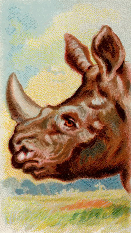 Cigarette card - Indian rhinoceros