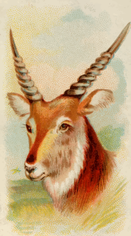 Cigarette card - Senegal antelope