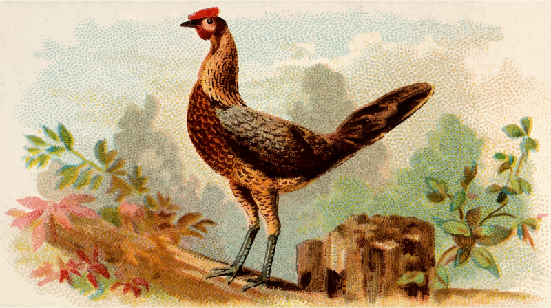 Cigarette card - Black Breasted Red Game Hen