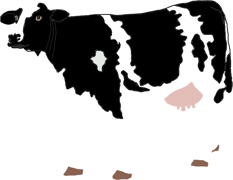 Realistic Cow Illustration