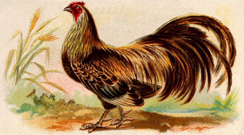 Gigarette card - Ayam Jallak Malay Game Cock