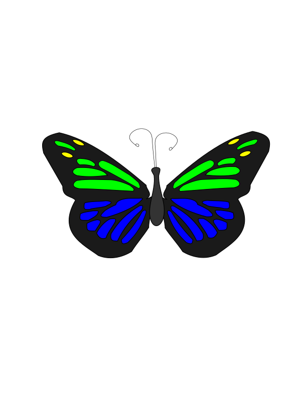 Floating Butterfly Animation
