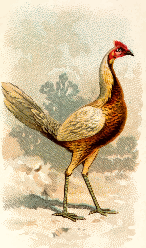 Cigarette card - Pile Game Hen