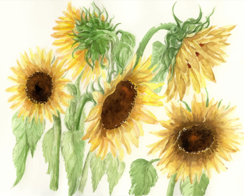 cristieleung's Sunflowers vectorised